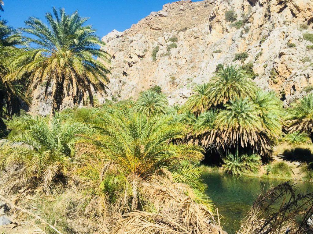 Preveli Palm trees